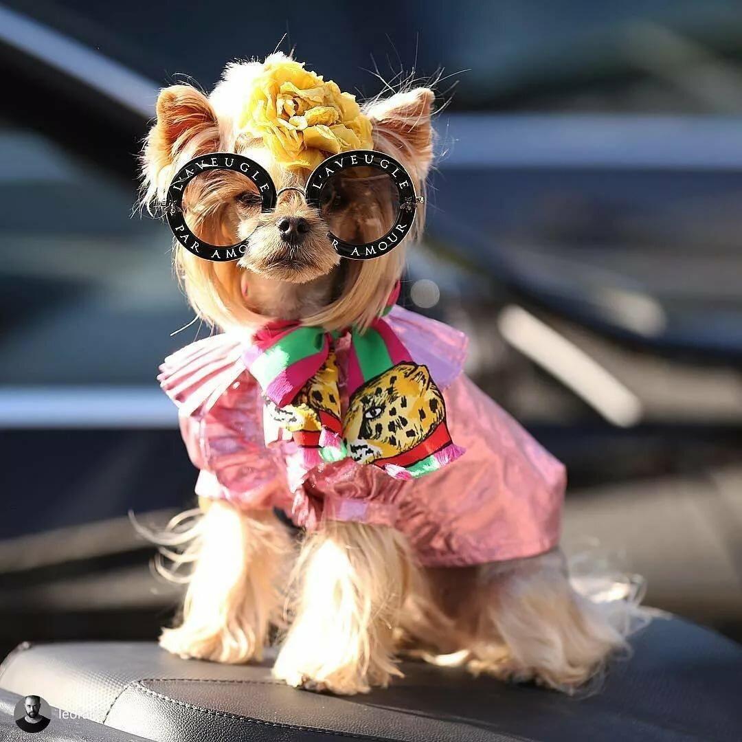 Картинки модная собака