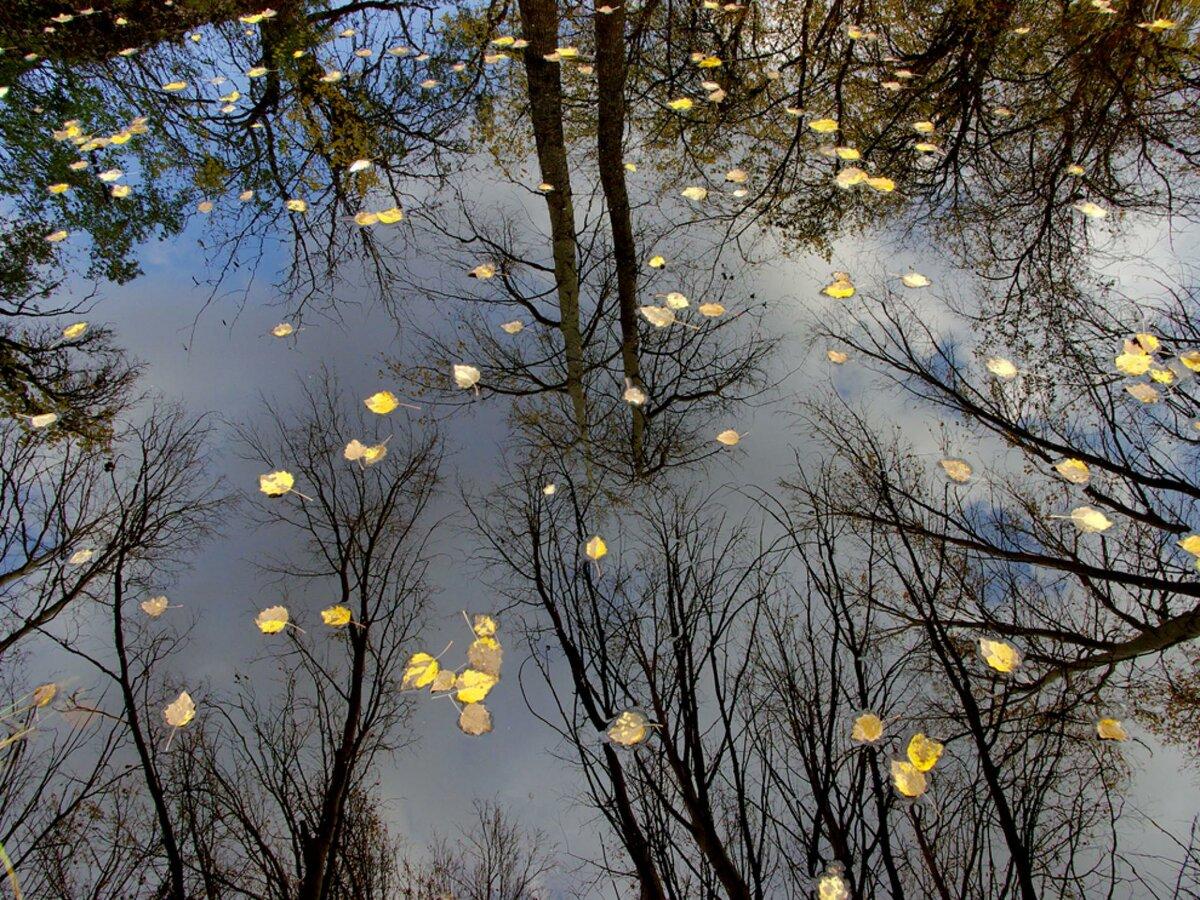 Гифка дождь осень