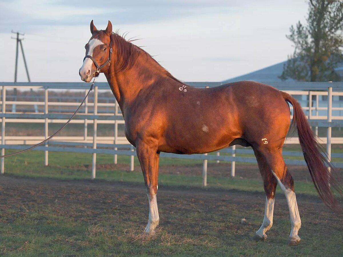 лошади картинки донская аксессуар, вяжется довольно