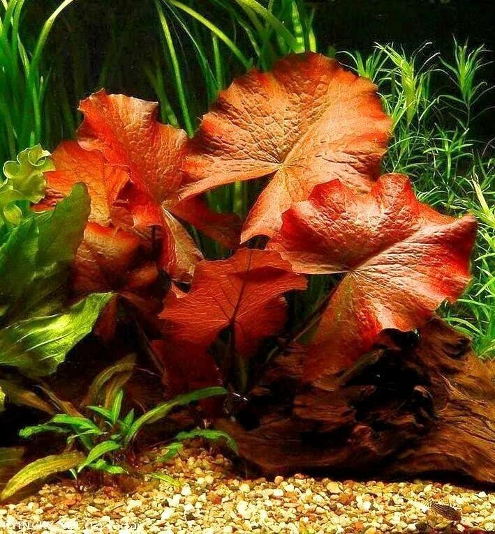 унылые аквариумные цветы фото петербурге