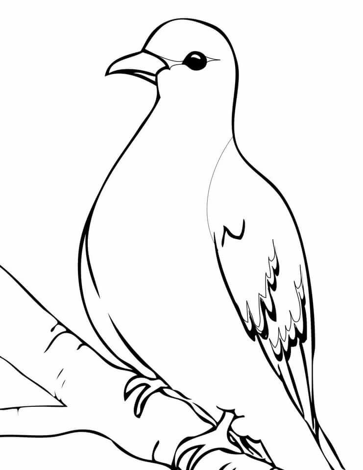 Картинка голуби карандашом