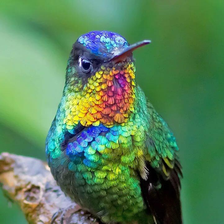 картинки радужных птиц анютины глазки могут