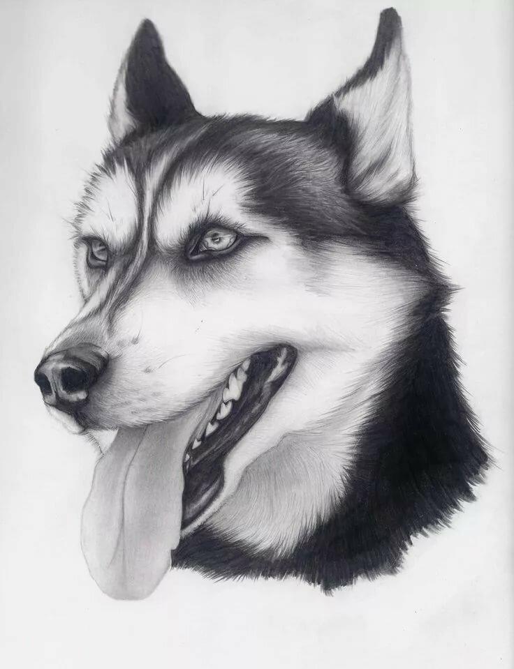 Крутые рисунки собаки, для