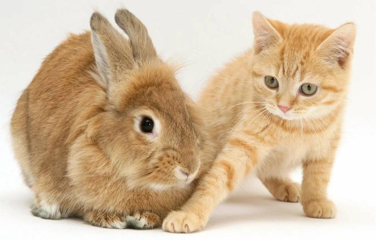 картинки с котятами и крольчатами можете опубликовать