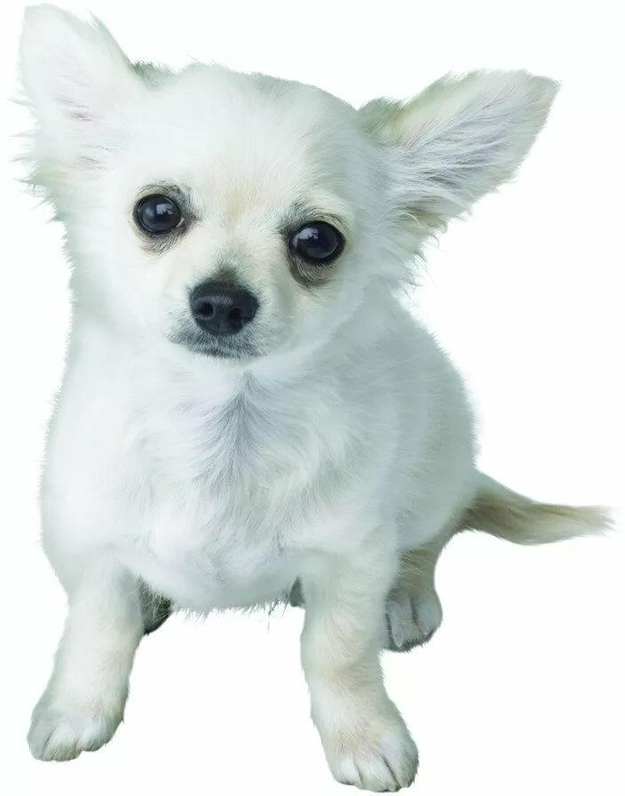 белые собачки гифка лучше занимайтесь классе
