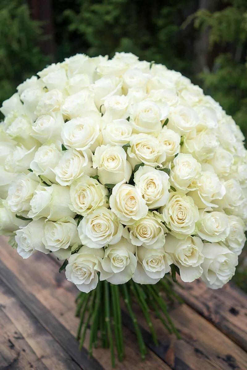 Картинки белых роз букеты