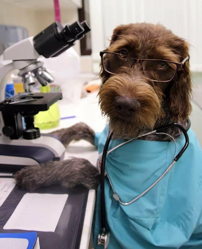 Доктор животные картинки