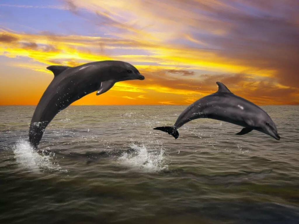 Красивые картинки с дельфинами