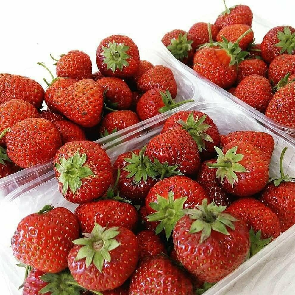 Домашняя ягодница клубника и земляника в Электростали
