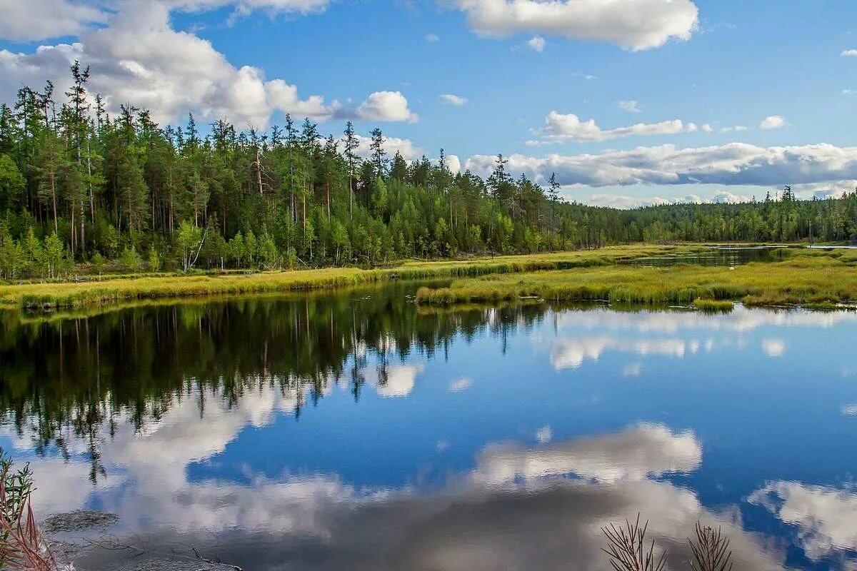 картинки лесные озера или иному