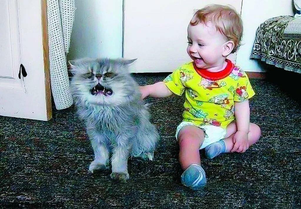 Смешные картинки с животными с надписями до слез для детей 10
