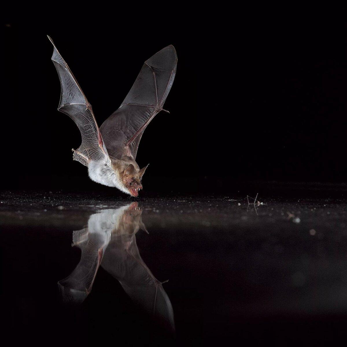 картинки темных пещерах ориентируются в полете с помощью шот помощью