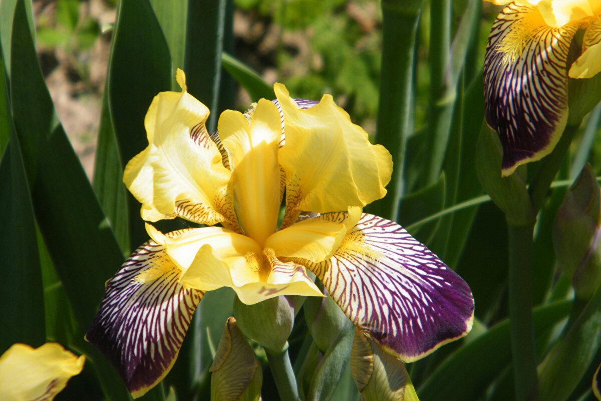 ириски цветы фото один тех