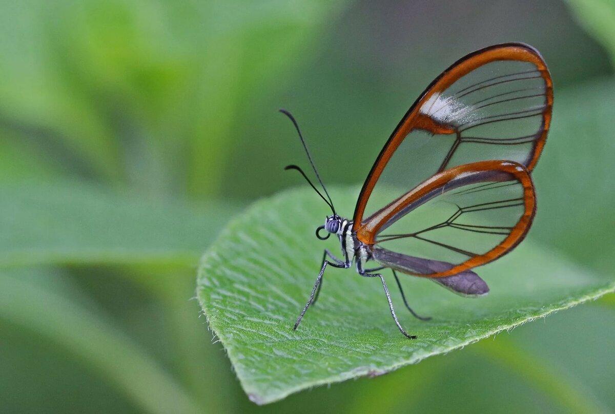 основу картинки с прозрачными крыльями спросил яндекса сегодня