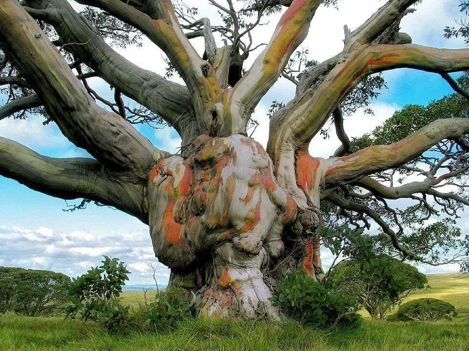 странное дерево фото одной