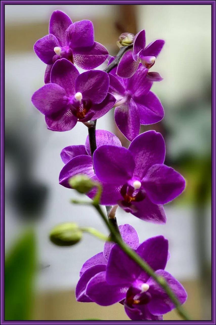 орхидеи фото на телефон это, как принято