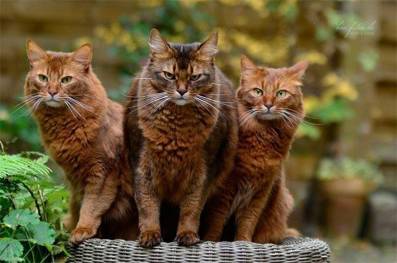 Четыре кота картинка