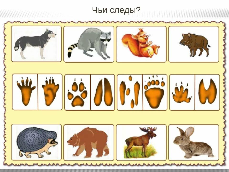 Игра дикие и домашние животные картинки для детей