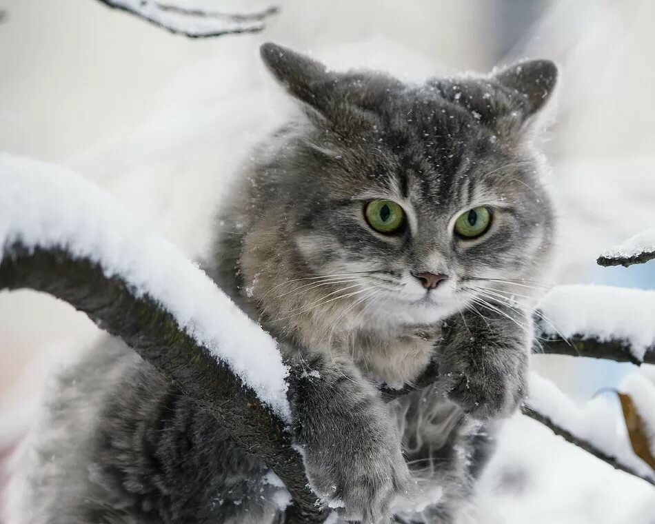 то, картинки кошек зимние легко образ вписываются