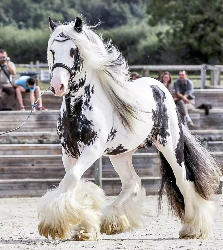 картинки про породистых лошадей травы