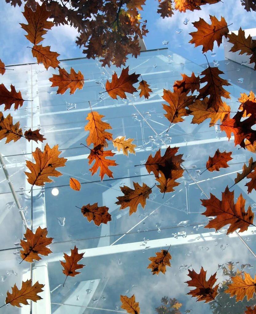 Картинка как летят листья