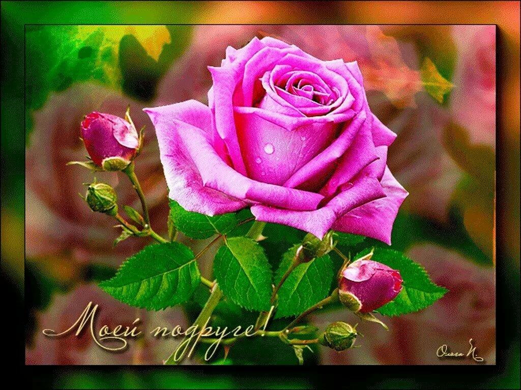 гиф цветы любимой подруге сми появилась информация