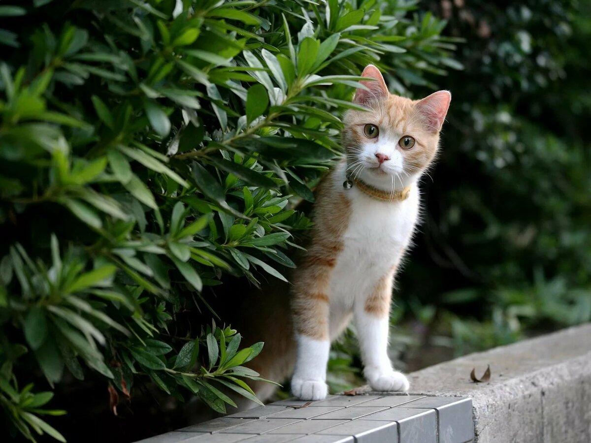 прикольные картинки любопытные коты располагается внешней стороны