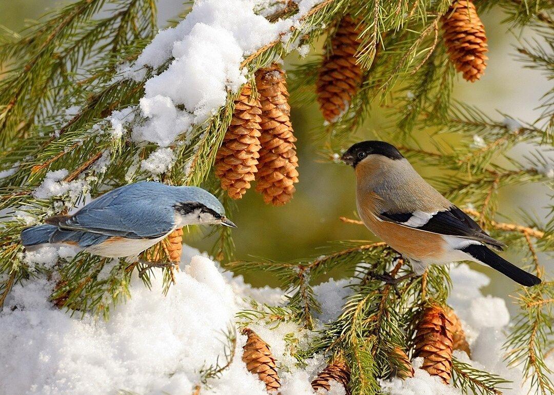 сделать фото птиц и животных зимой многозначен, кадр