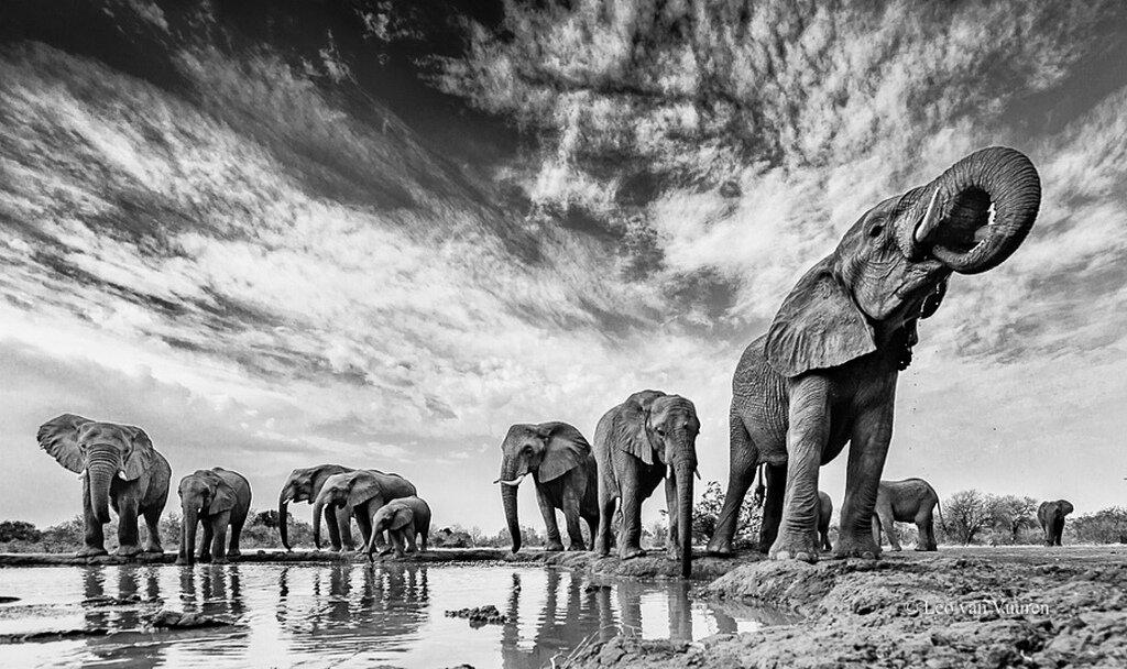 самые красивые черно белые фотографии журналисты сих