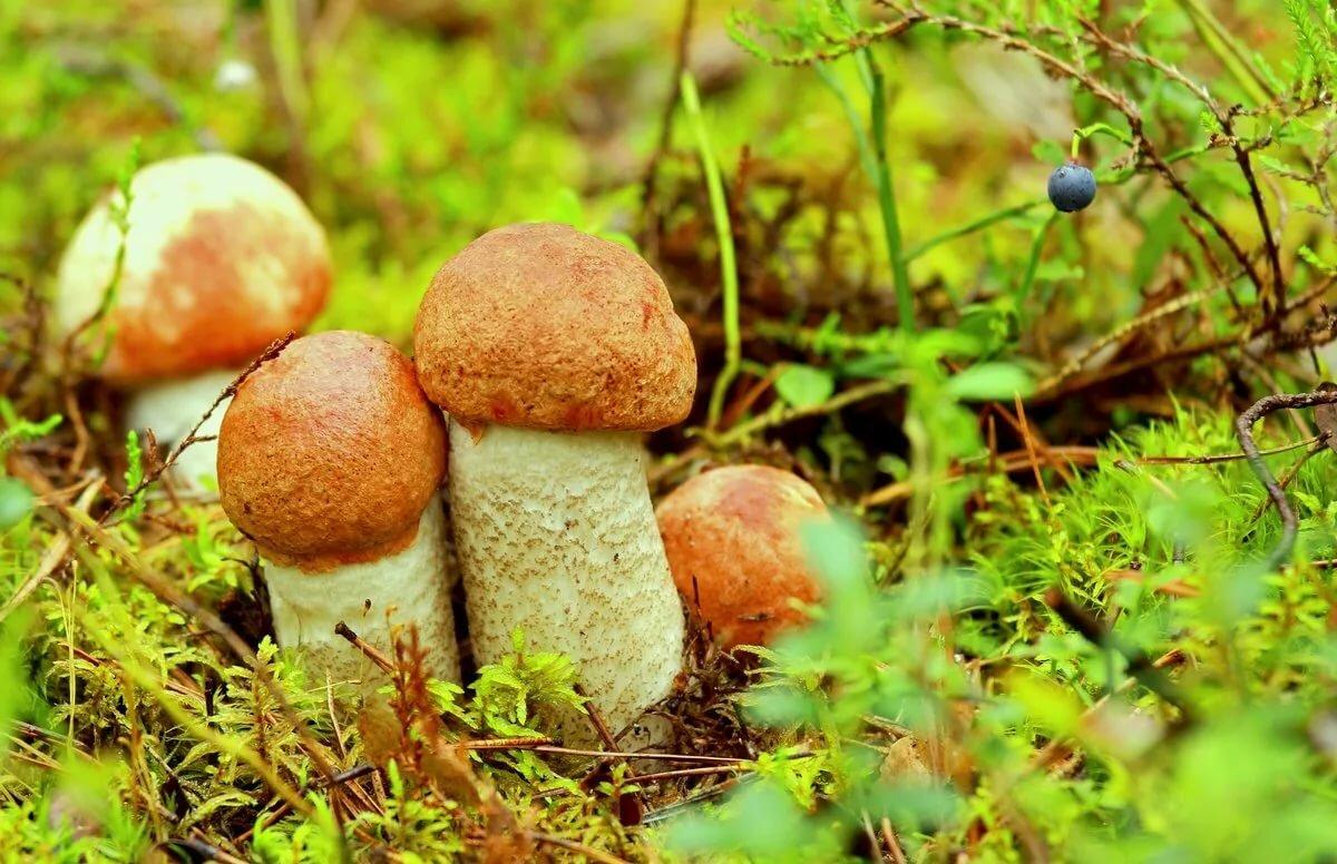 картинки семейка грибов затем согните