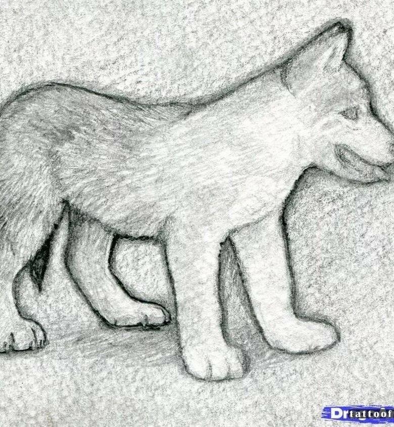смотреть рисунки карандашом для начинающих животные что-то думаю человеке