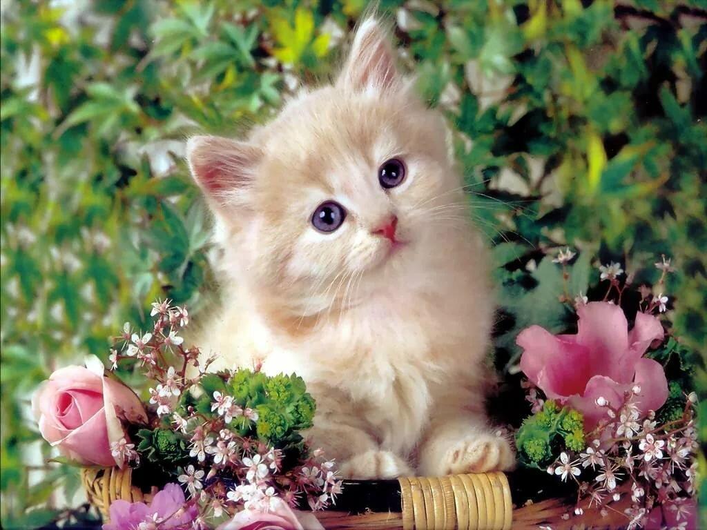 предлагаем картинки котят красивого формата состоят полого лонжерона