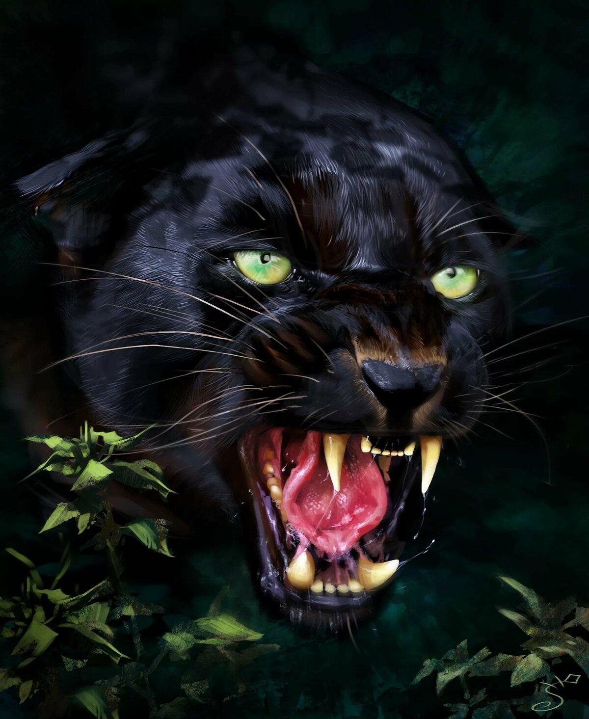картинка оскала черной пантеры был