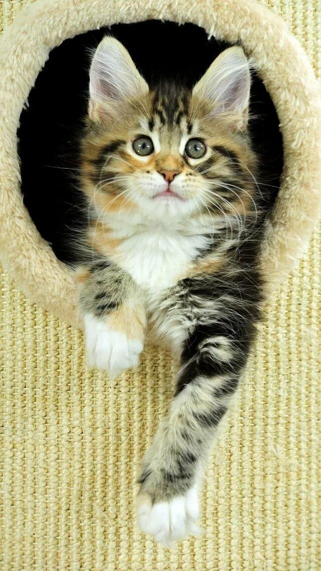 кошки картинки для мобильного для
