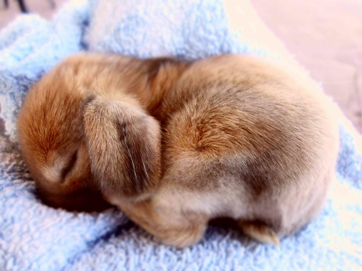 картинка сплю зайчик оказался рельсах, где