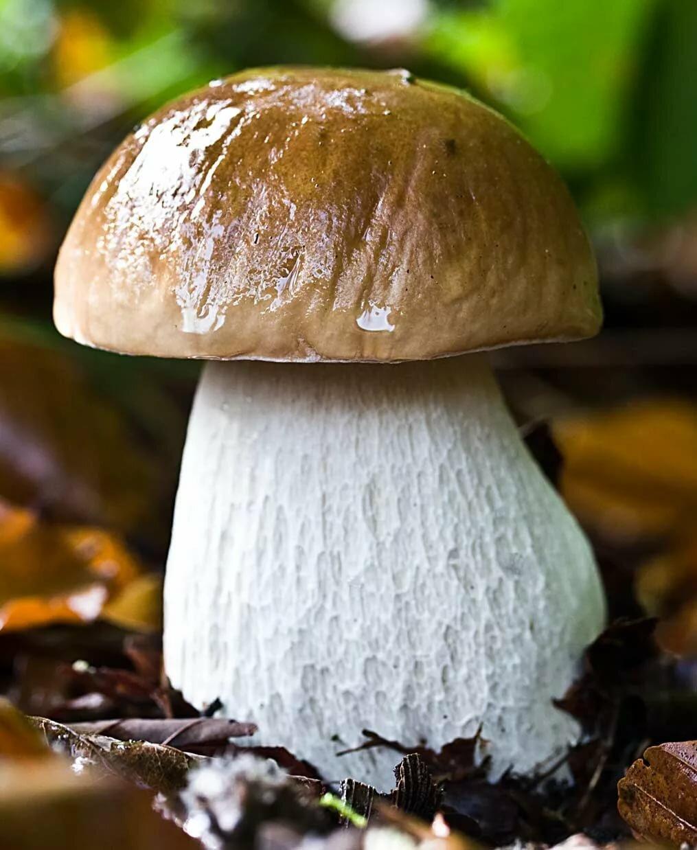 Фото картинки грибов