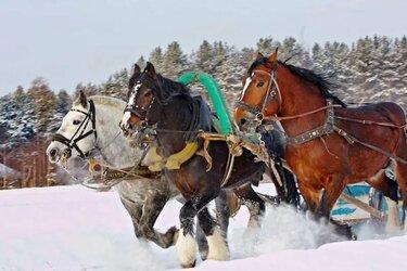лошади тяжеловозы тройка