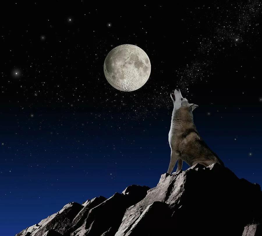 интернет-магазины картинки как волк на скале воет на луну трогательные
