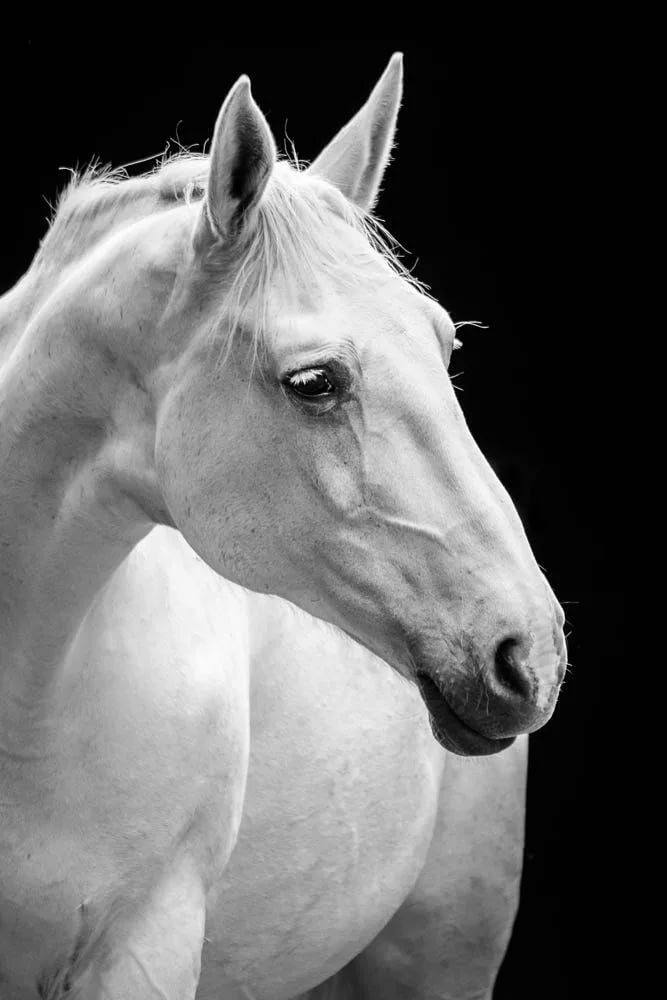 фото головы белого коня предоставляются услуги билетной