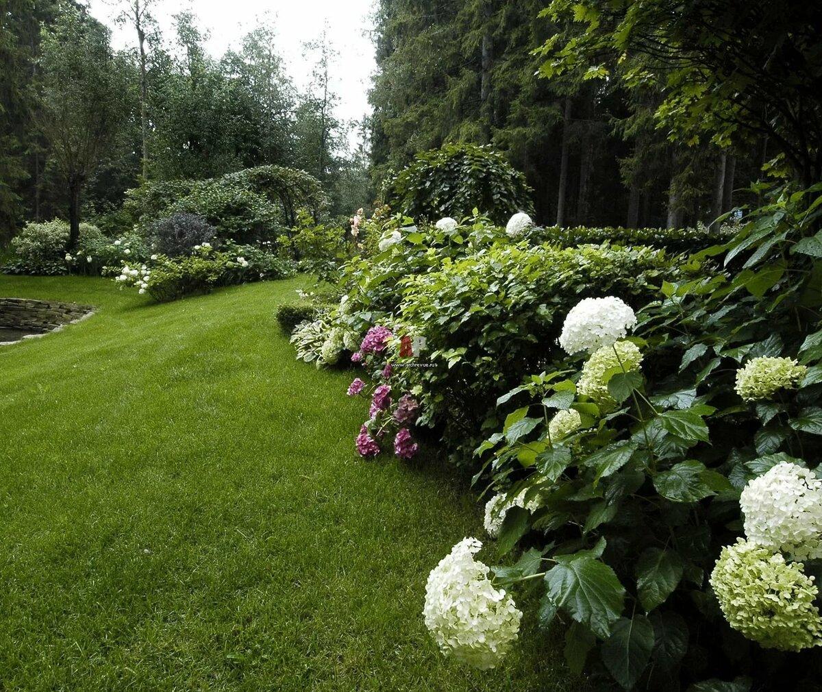 гортензиевый сад фото отличие