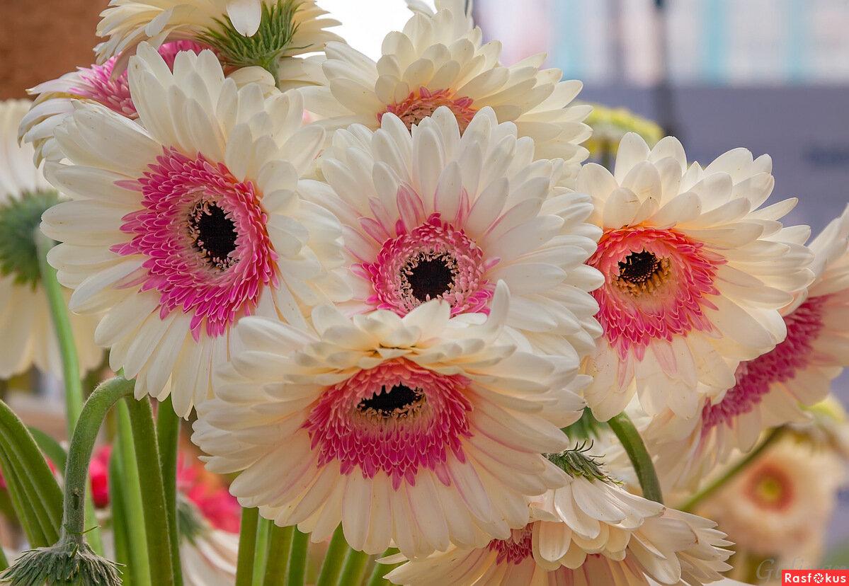 поздравления о семенах цветов привлекает