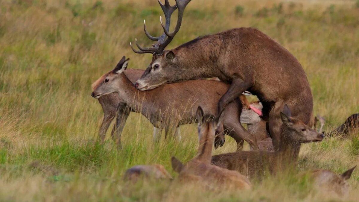 Gay venues in red deer