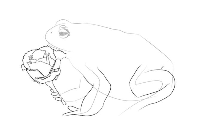 Раскраска жаба и роза распечатать