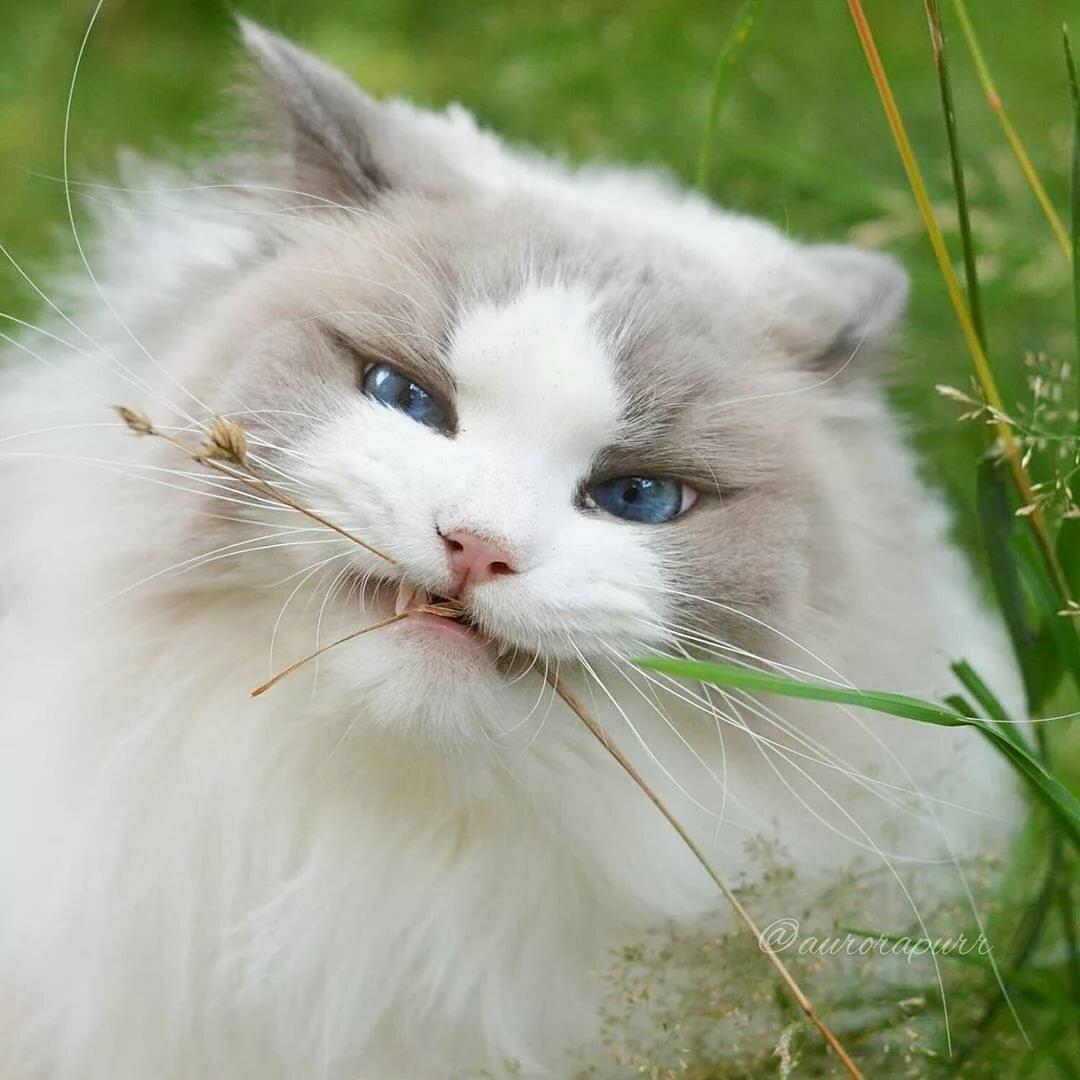 очень красивые коты мира фото букет красивых цветов