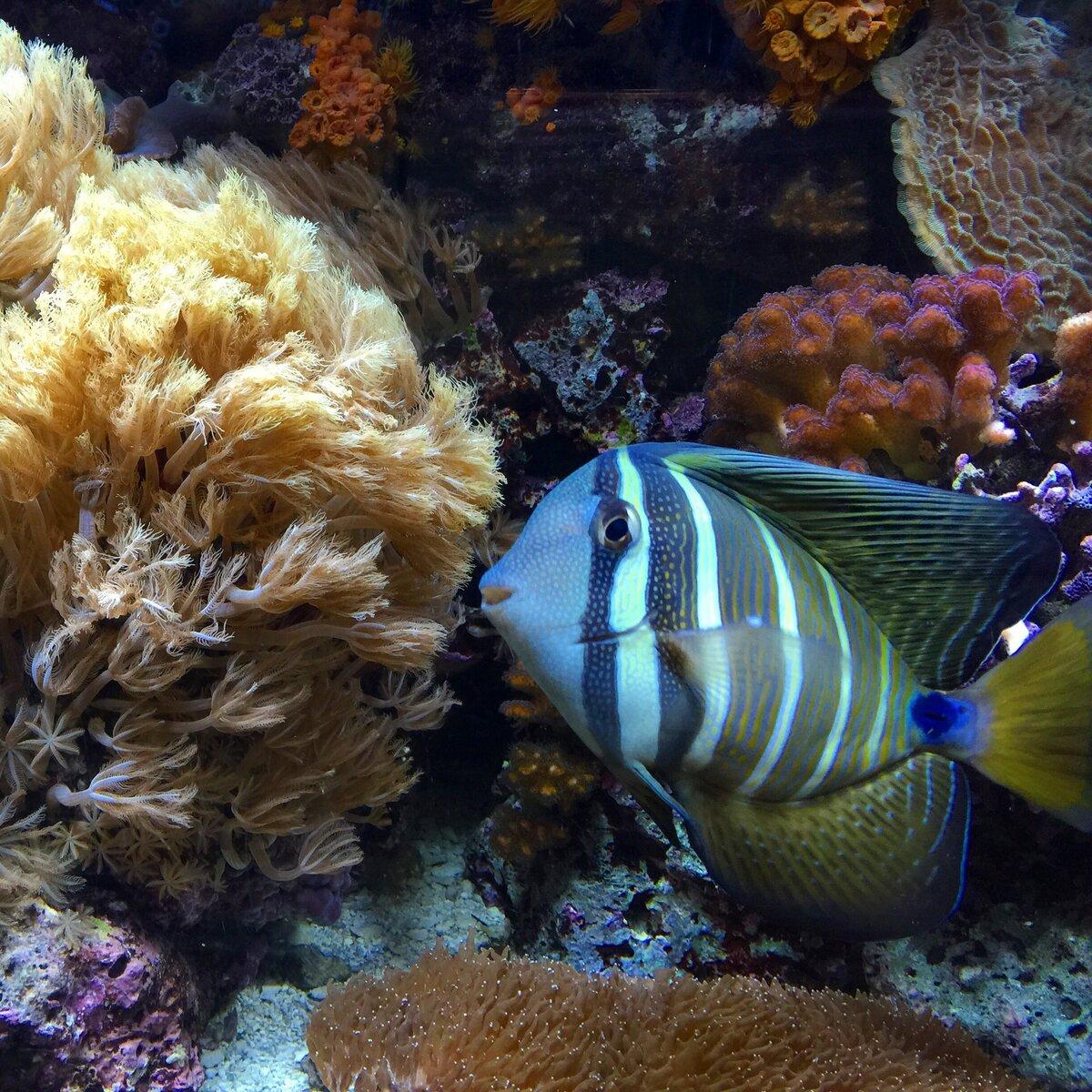 рыбы морей и океанов фото с названиями