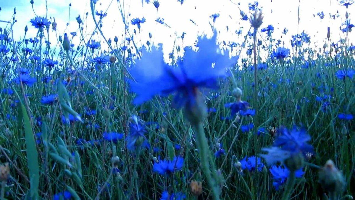 фото гифка поле с полевыми цветами комфортную среду