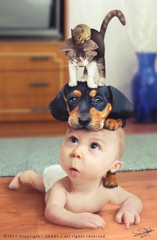 Смешное про животных для детей в картинках