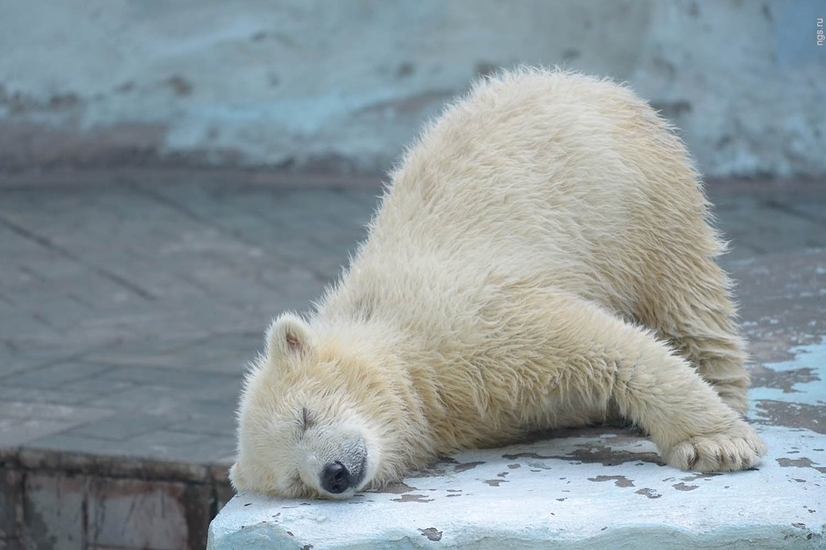 спящий медвежонок картинки