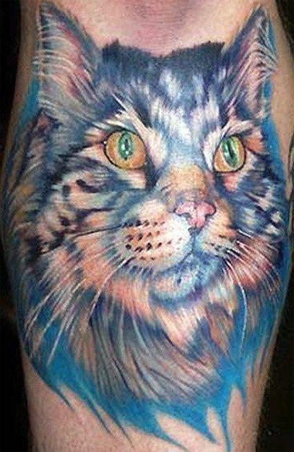 Коты выражают любовь