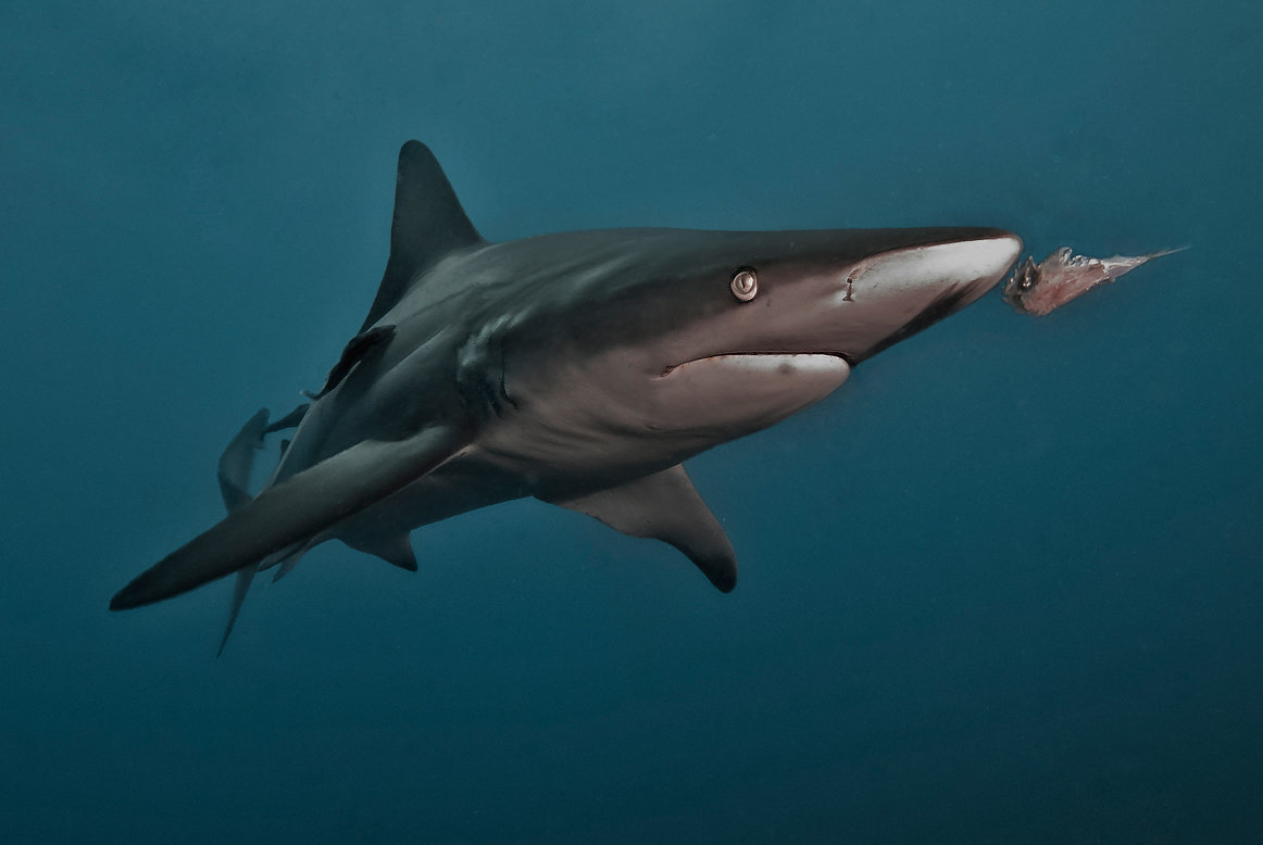 сделать ключ фото разных акул критерием нашей